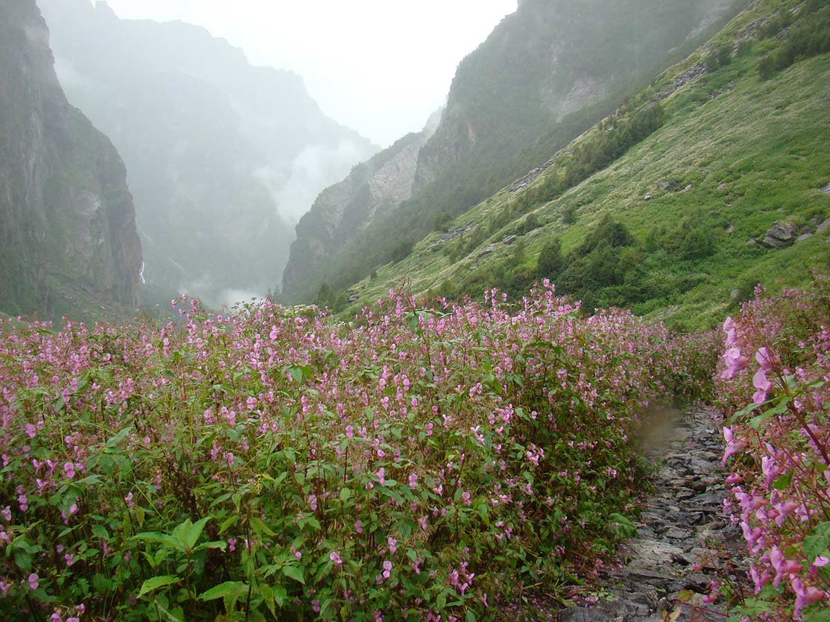 Valley of Flowers Trekking Adventure Himalayas Uttarakhand