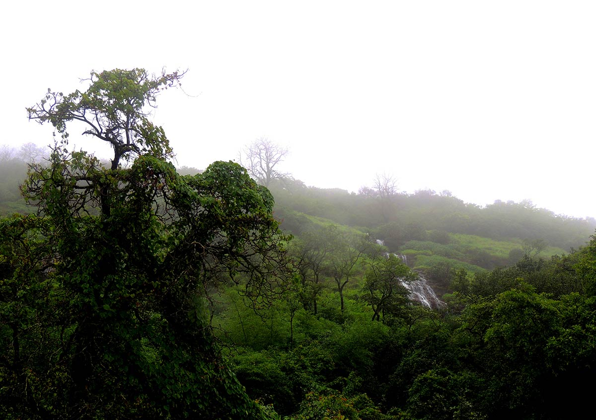 Andharban Trek Maharashtra Monsoon Trek Sahyadri Forests The Great Next