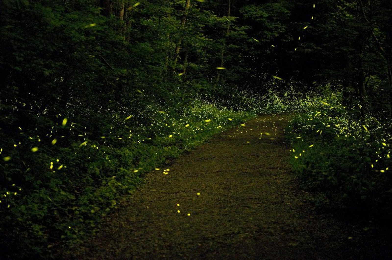 Purushwadi Fireflies Camping Night Trek Maharashtra Adventure Travel The Great Next