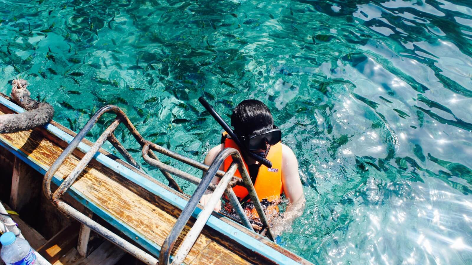 Snorkelling Scuba Diving Corals Fish PADI Advanced Open Water Diver Course Whaleshark Thailand Marine Life Underwater Sea Creatures Adventure Travel The Great Next