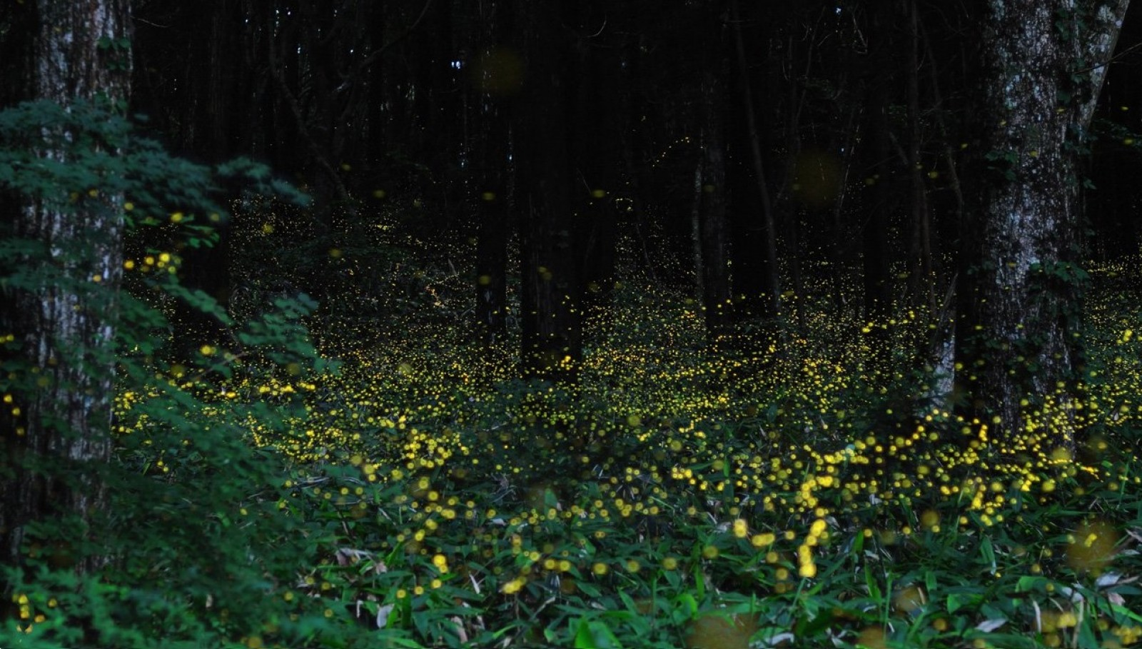 Fireflies Trekking Rajmachi Maharashtra Adventure Travel The Great Next