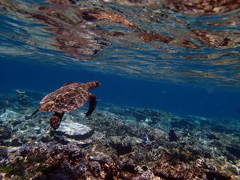 Snorkelling Bali Marine Life Underwater Corals Sea Creatures  Indonesia Adventure Travel The Great Next