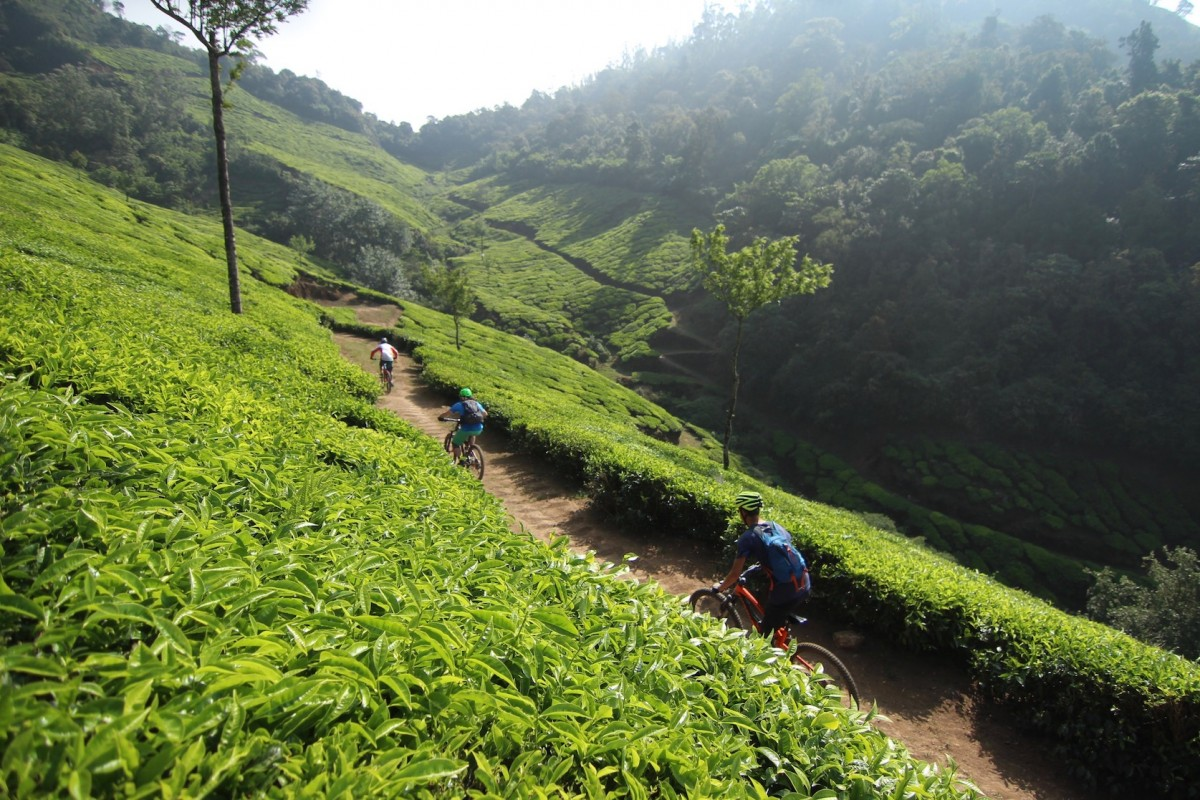 Cycling Mountain Biking Idukki Kerala Tea Cardamom Plantation The Great Next