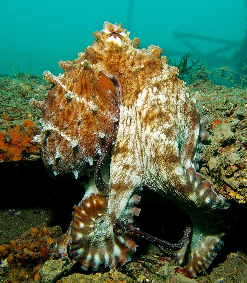 Discover Scuba Diving Padangbai Bali PADI Sea Adventure The Great Next