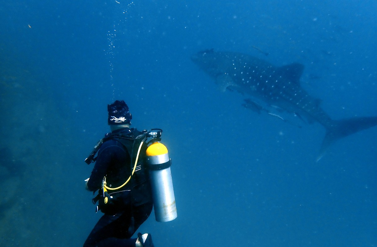 Discover Scuba Diving Phuket Corals Fish PADI Advanced Open Water Diver Course Whaleshark Thailand Marine Life Underwater Sea Creatures Adventure Travel The Great Next