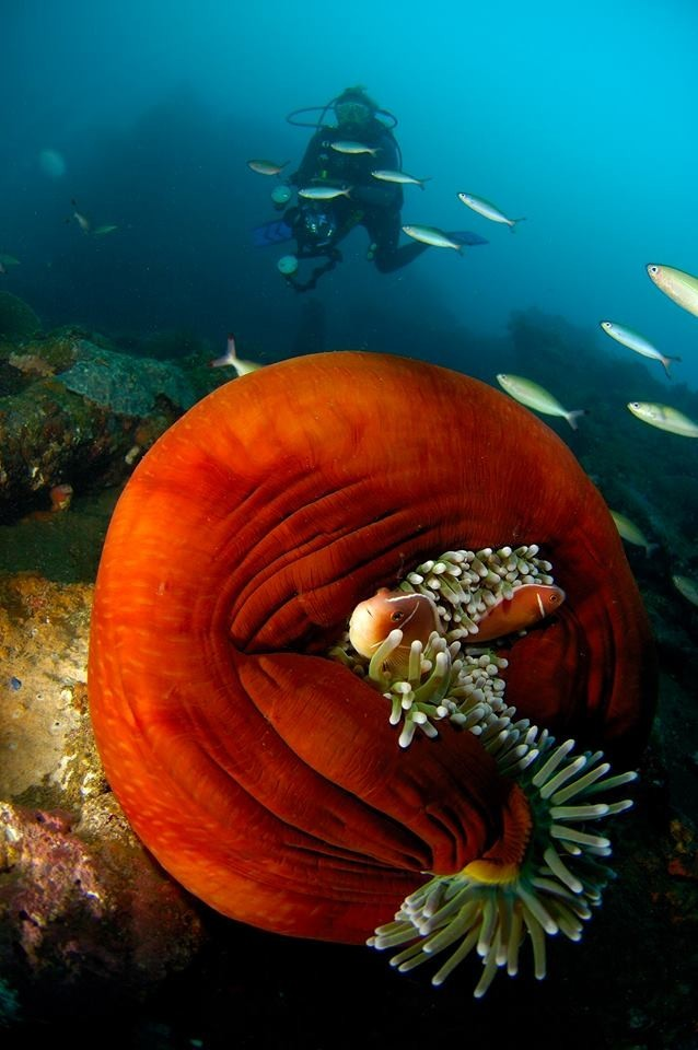 Snorkelling Amed Bali Beginner Discover Try Bali Indonesia The Great Next