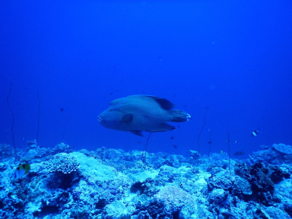 Scuba Diving Open Water PADI Andaman Havelock Adventure Travel The Great Next