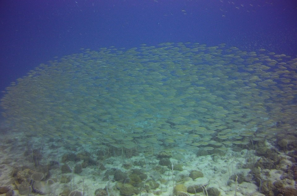 Scuba Diving Koh Chang Thailand Adventure Travel The Great Next