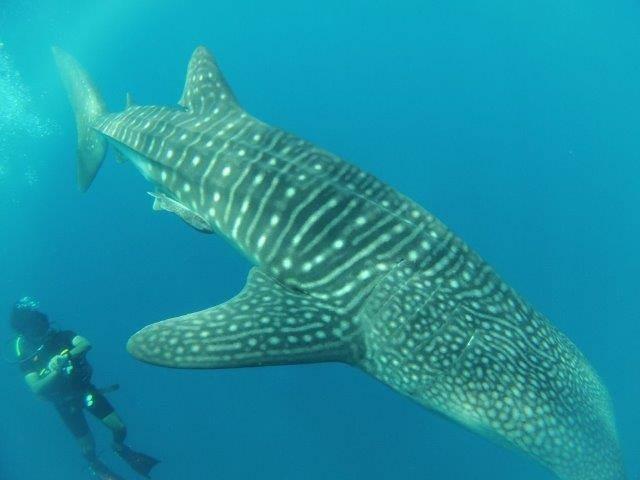 Scuba Diving Open Water PADI Andaman Havelock Adventure Travel The Great Next