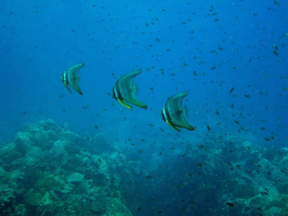Scuba Diving Koh Chang PADI Open Water Diver Thailand Adventure Travel The Great Next