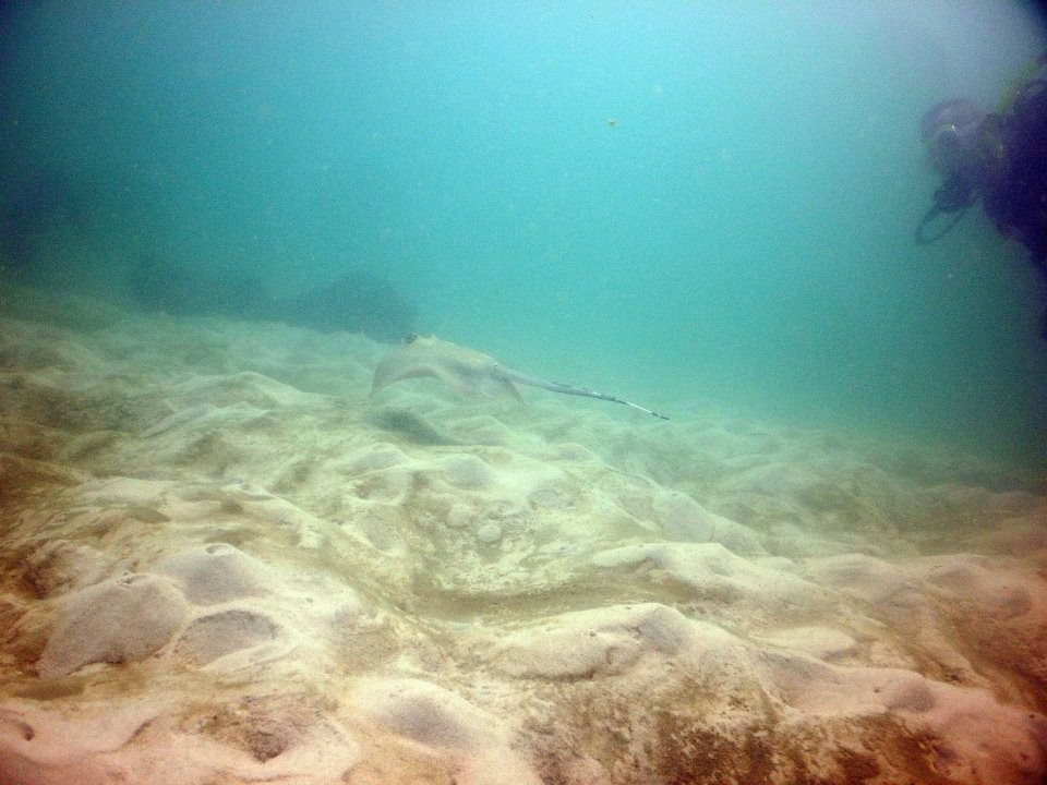 Scuba Diving PADI Advanced Open Water Diver Pattaya Thailand Adventure The Great Next