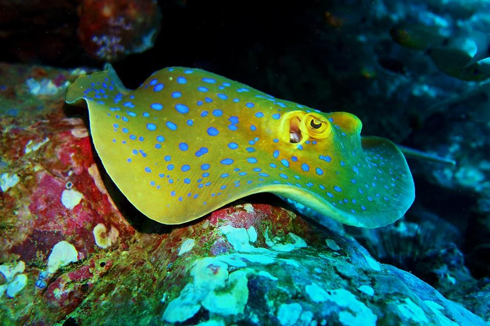 Discover Scuba Diving Koh Samui Gulf of Thailand The Great Next