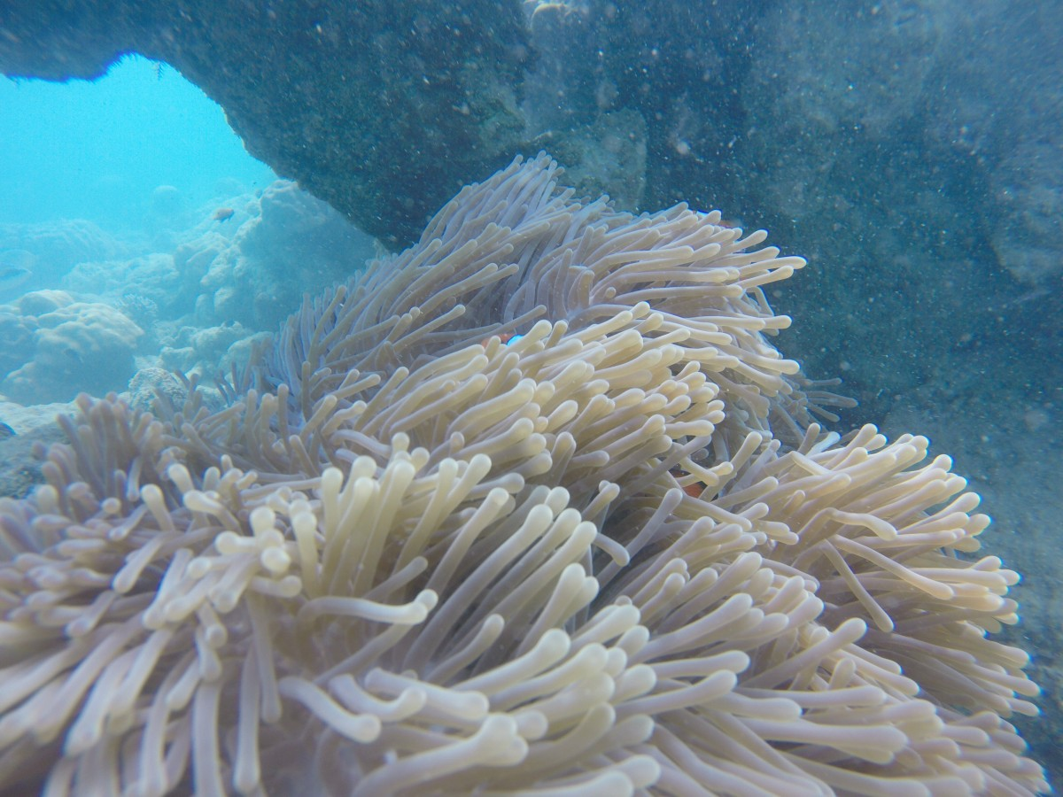 Scuba Diving Havelock Andaman Try Dive Adventure Activity Nature