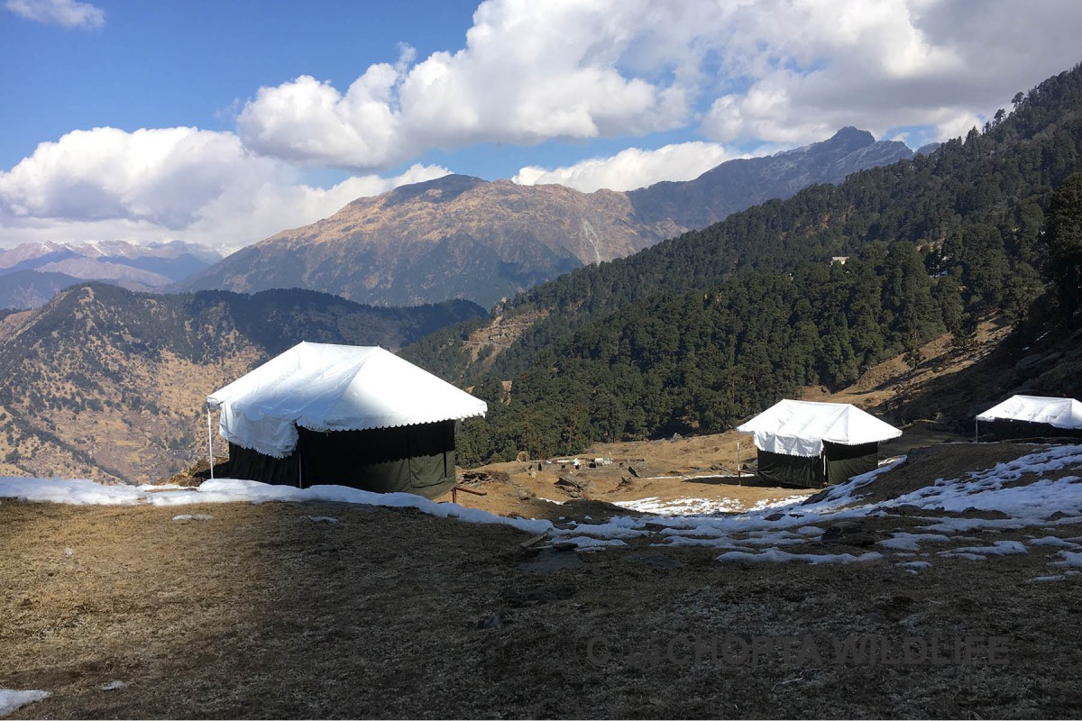 Camping Chopta Adventure Travel The Great Next