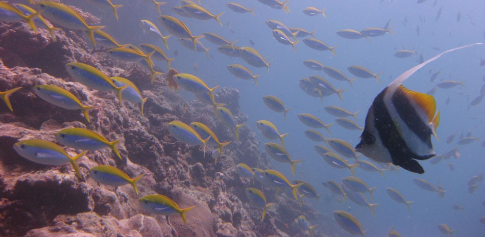 Scuba Diving AOWD Course Andamans Havelock Adventure SSI The Great Next