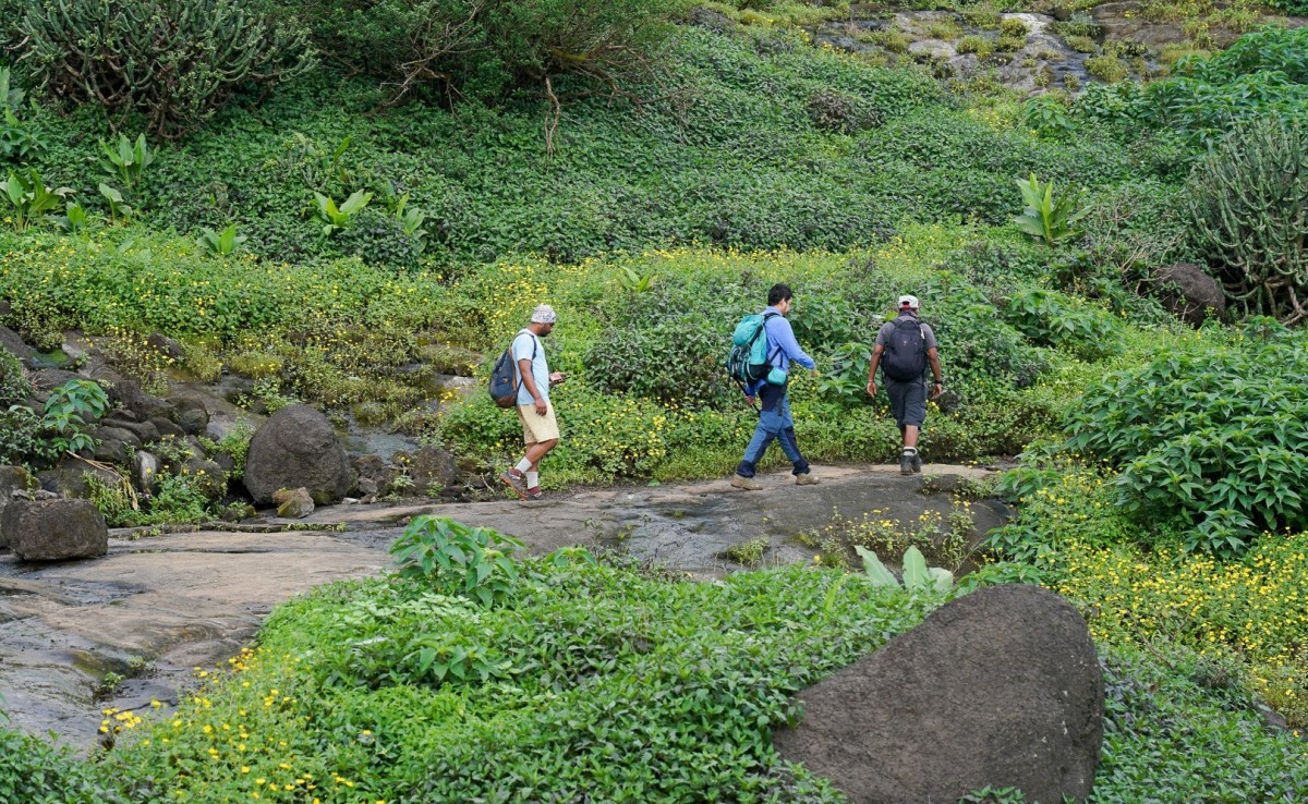 Trekking Harishchandragad Maharashtra Adventure Travel The Great Next