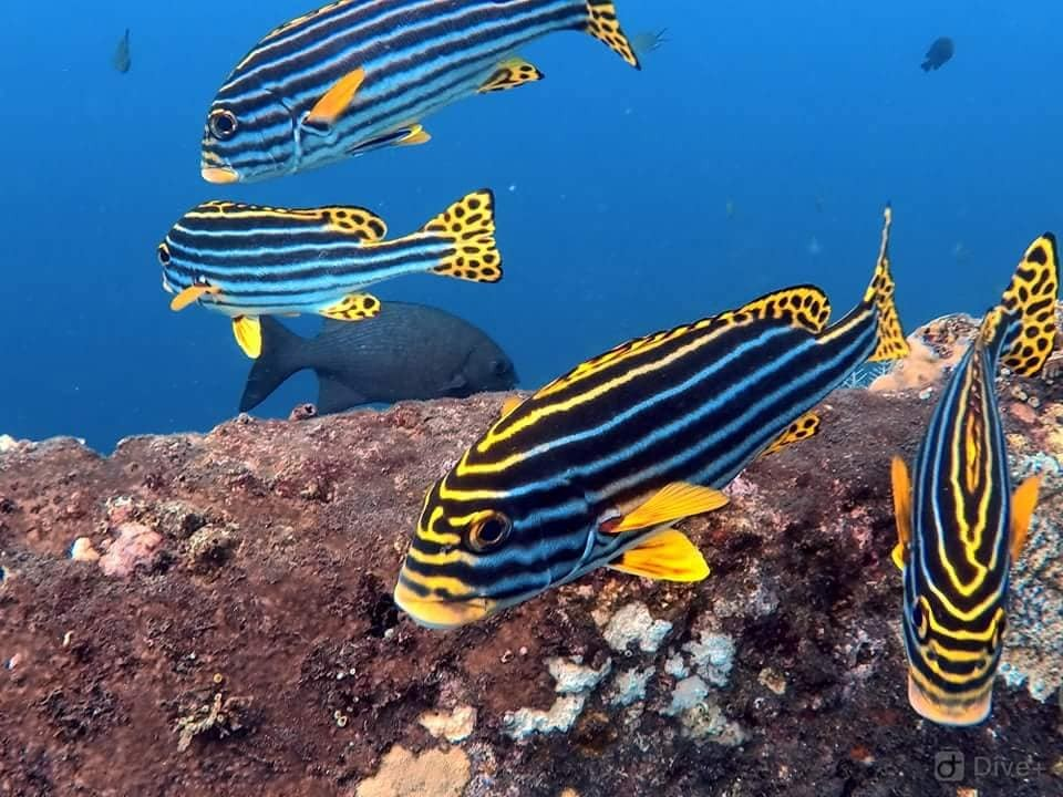 Scuba Diving Bali Marine Life Underwater Corals Sea Creatures  Indonesia Adventure Travel The Great Next