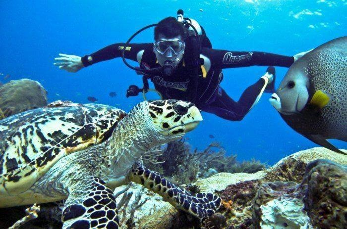Scuba Diving Snorkelling Kayaking Cycling Andaman Adventure Travel The Great Next