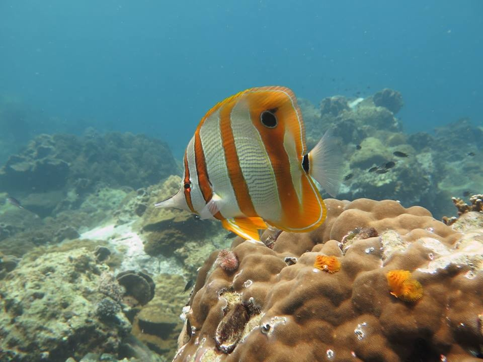 Scuba Diving PADI Advanced Open Water Diver Thailand Koh Chang Adventure Travel The Great Next
