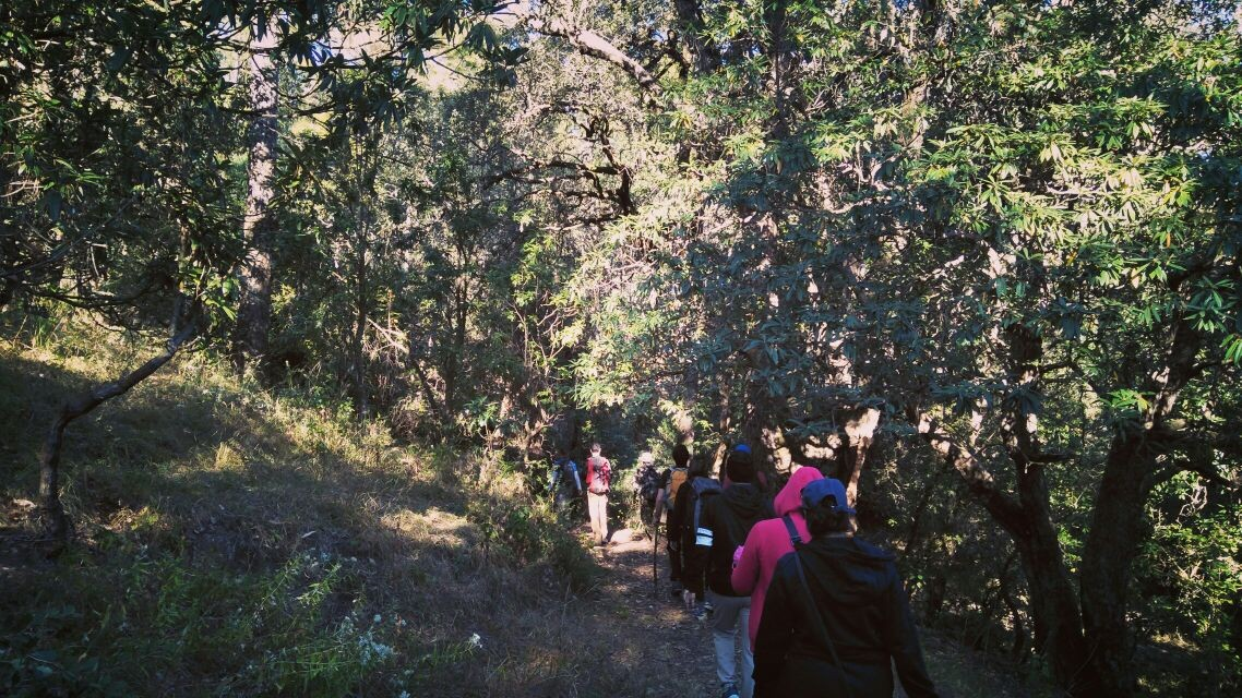 Binsar Wildlife Sanctuary Trek Weekend Delhi Uttarakhand The Great Next