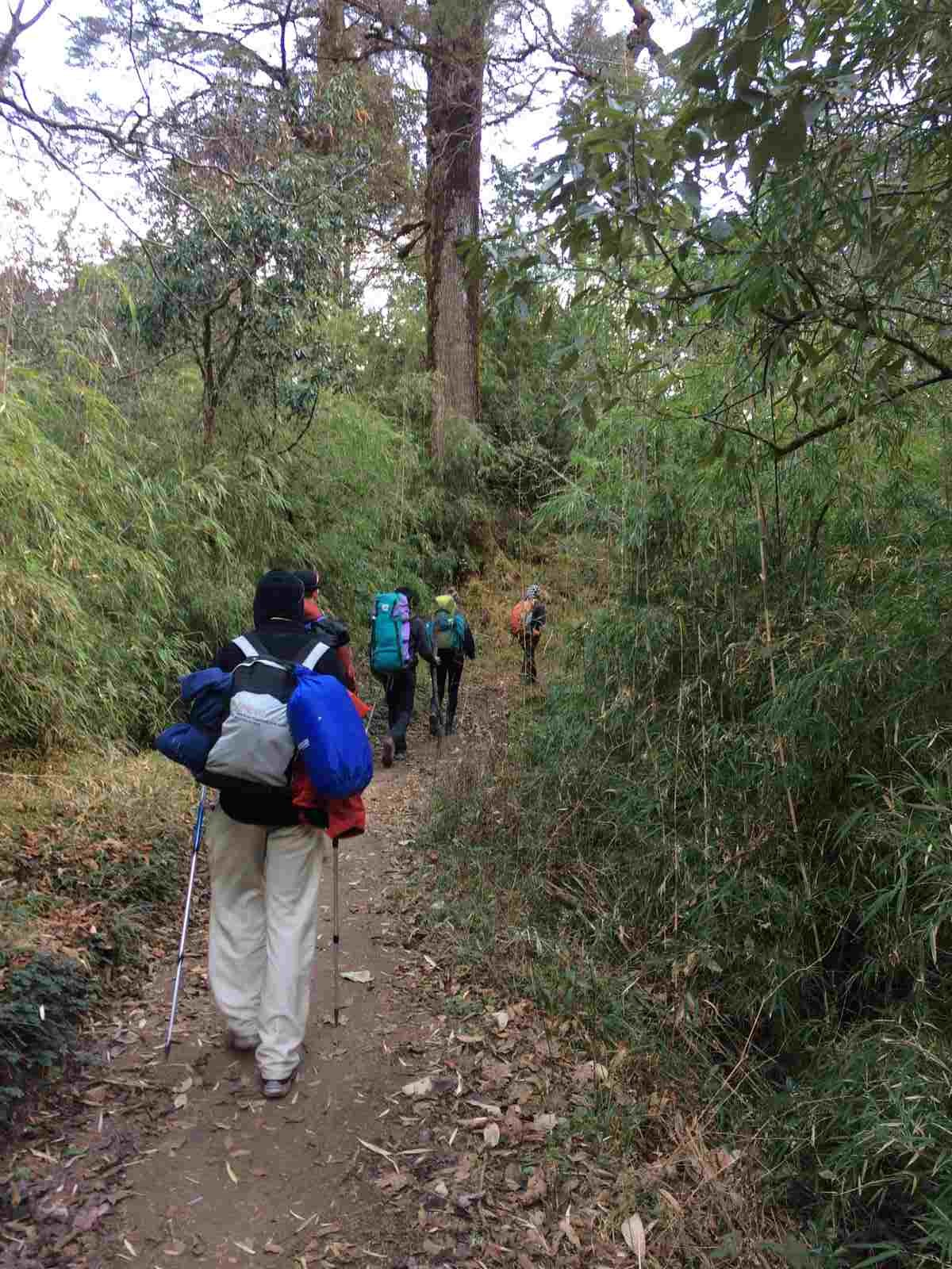 Trekking Sandakphu West Bengal Adventure Travel The Great Next