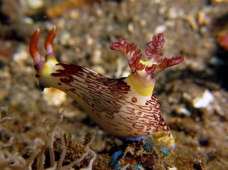Scuba Diving Bali Marine Life Underwater Corals Sea Creatures  Indonesia Adventure Travel The Great Next