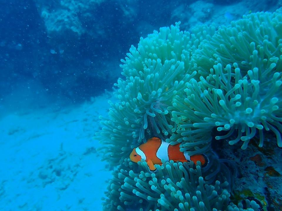 Scuba Diving Advanced Open Water PADI Havelock Andaman Nicobar Adventure Travel The Great Next