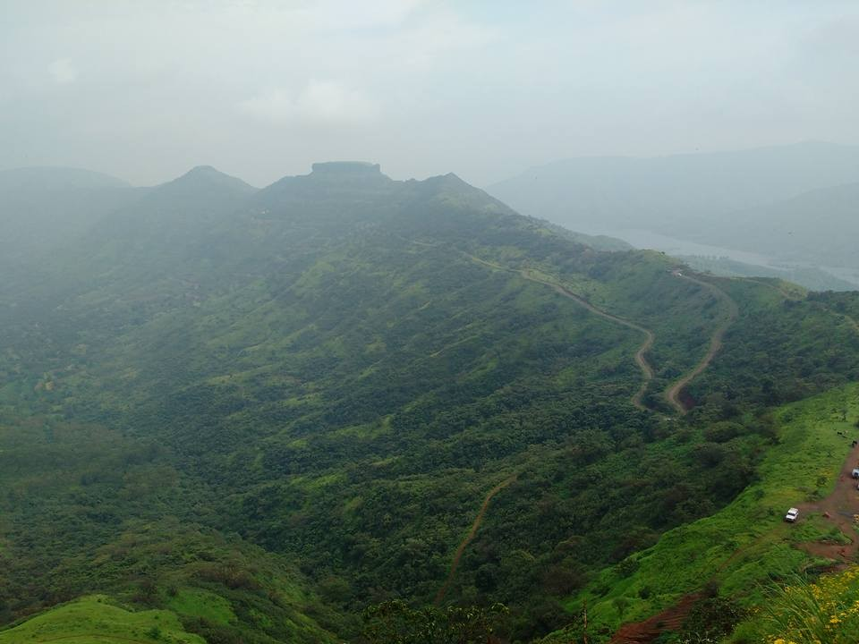 Raireshwar Kenjalgad Flower Blooming Western Ghats Maharashtra Sahyadris Trek Shivaji Flowers Blooming Adventure Travel The Great Next
