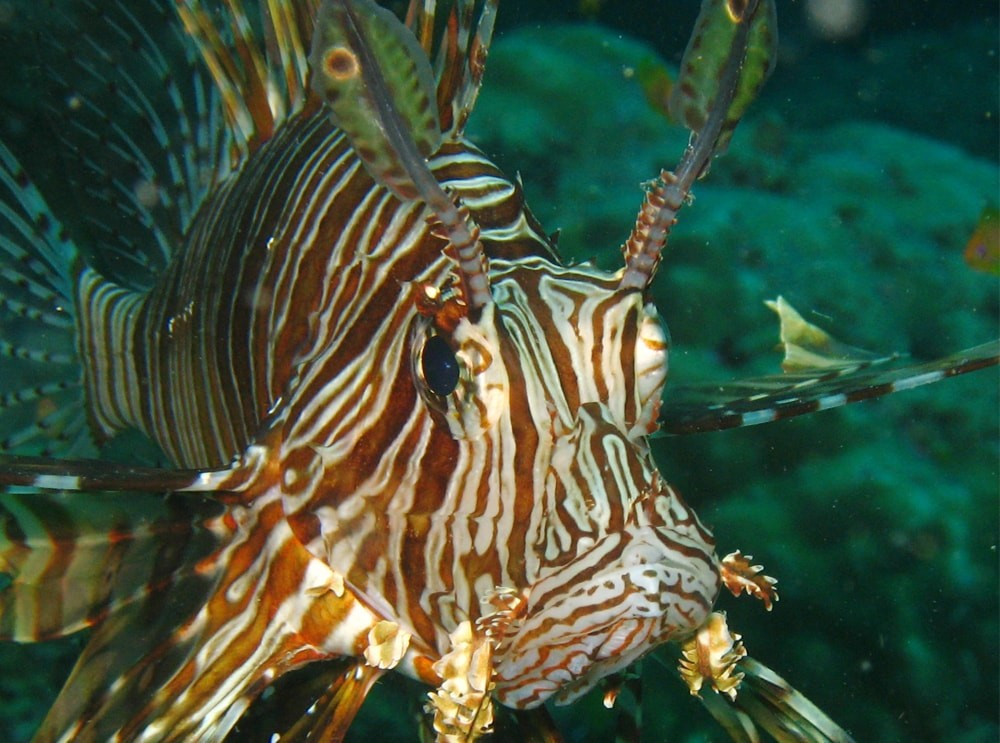Scuba Diving Andamans Neil Island Sea Turtle Fish The Great Next