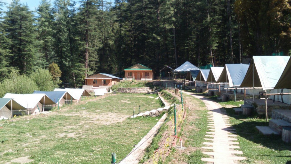 Camping Shimla Himachal Pradesh Adventure Travel The Great Next