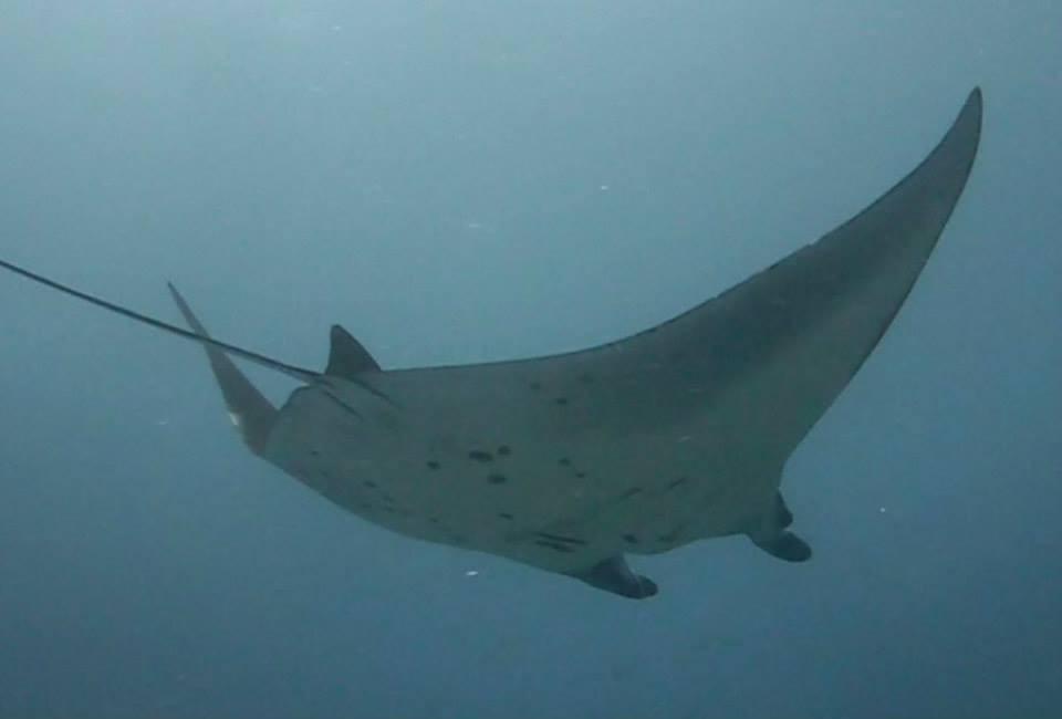 Scuba Diving Bali Indonesia Nusa Penida Adventure Travel The Great Next