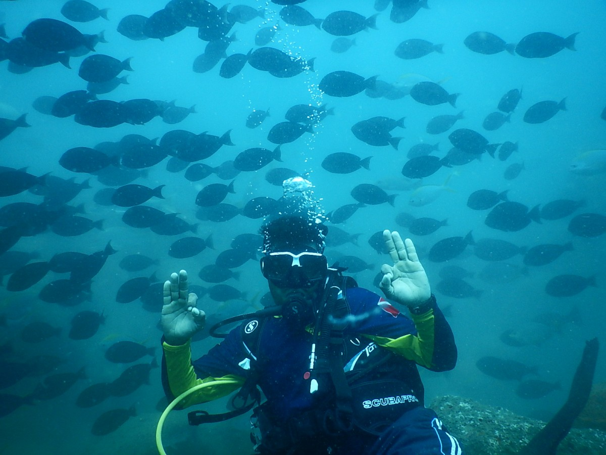 Scuba Diving Udupi Karnataka The Great Next Adventure Travel