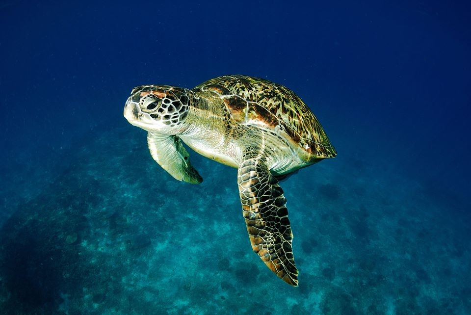 Scuba Diving Bali Snorkelling The Great Next