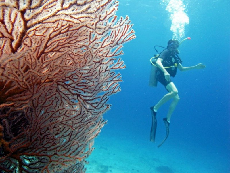 Scuba Diving Bali Gili Trawangan Indonesia Adventure Travel The Great Next