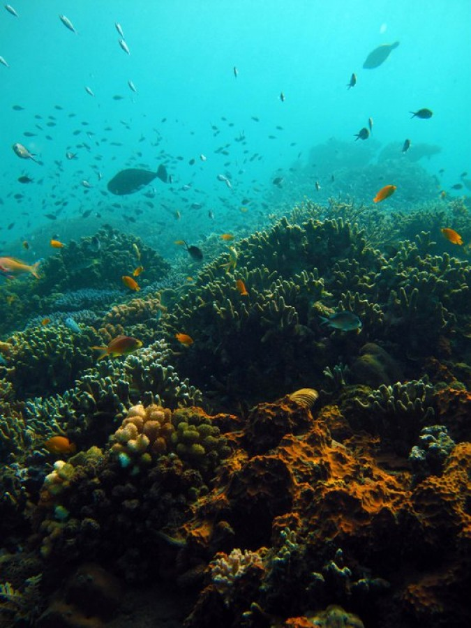 Scuba Diving PADI Discover Bali Amed Indonesia Adventure Travel The Great Next