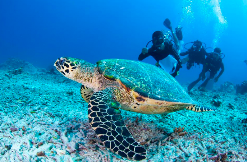 Discover Scuba Diving Gili Islands Bali Indonesia Water Sports Diving International Travel Adventure