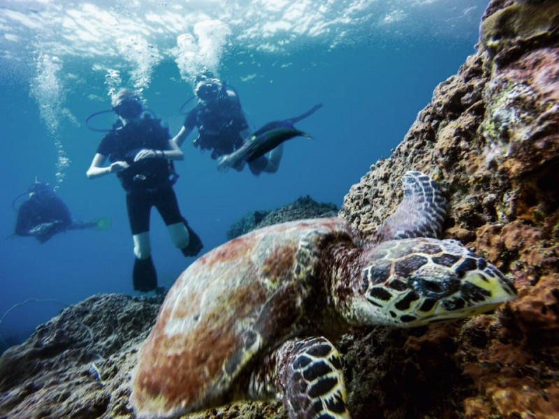 SSI Advanced Open Water Diver Course Phi Phi Islands Thailand Adventure The Great Next