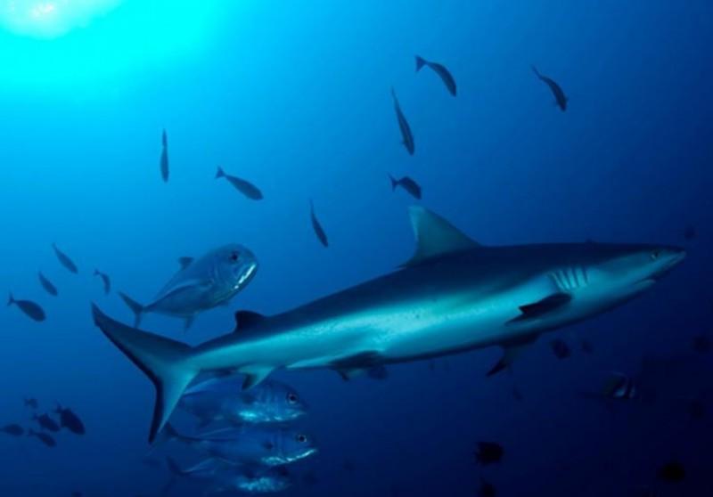 Scuba Diving Liveaboard Maldives The Great Next Adventure Travel