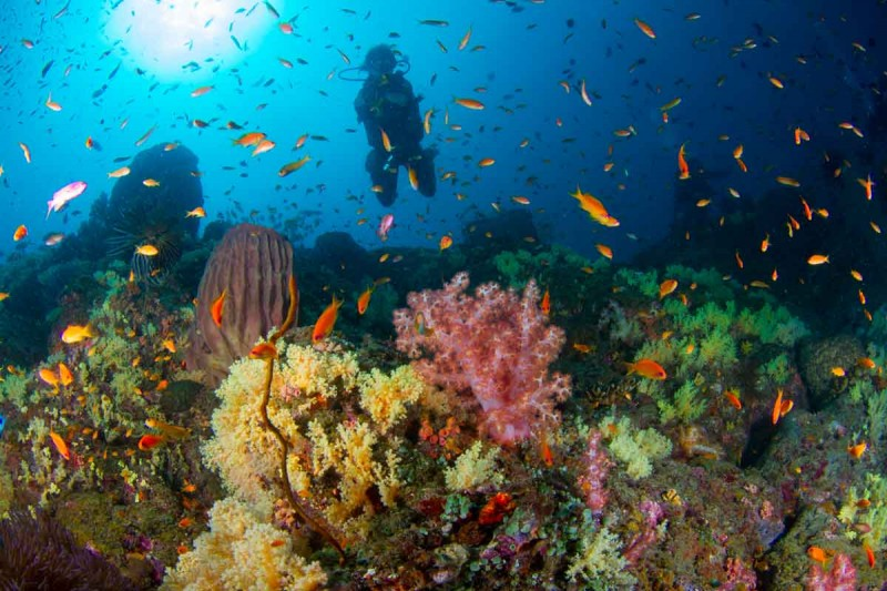 Scuba Diving Course PADI Andaman Adventure Travel The Great Next